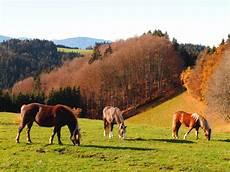 pferde im herbst foto bild jahreszeiten herbst natur