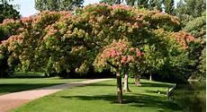 arbre a pousse rapide quel arbre choisir pour s offrir un coin d ombre au jardin