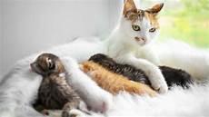 Malvorlage Katze Mit Jungen Geliebte Katze Magazin