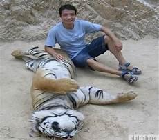 Harimau Di Kuil Ini Jinak Seperti Kucing Dairishare