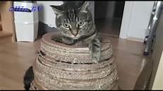 Katzenh 246 Hle Aus Karton Selber Bauen Ganz Einfach
