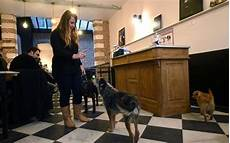 bar a chien lille a lille un caf 233 224 chiens pour rapprocher humains et