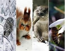 Die 169 Besten Bilder Tiere Im Winter In 2018