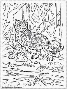 jungle coloring pages at getcolorings free