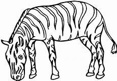 ausmalbilder malvorlagen zebra kostenlos zum ausdrucken