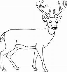 cerf dessin facile comment dessiner un cerf