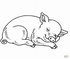 Lustige Schweine Ausmalbilder Sleeping Baby Pig Coloring Page Free Printable Coloring