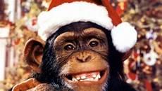 monkey g a the giveback agency