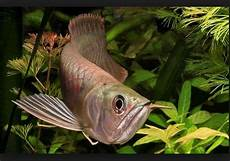 Jenis Ikan Hias Dan Harganya Sekarang Ini