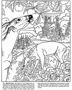 printable dover coloring pages home coloring page 1