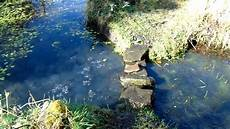 frogspawn in the permaculture pond and bog garden youtube