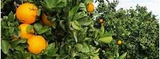 Orangen Frisch Nach Hause - orangen frisch nach hause herkunft val 232 ncia