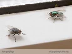 fliegenplage im haus fliegenplage fliegen aus dem haus vertreiben philognosie