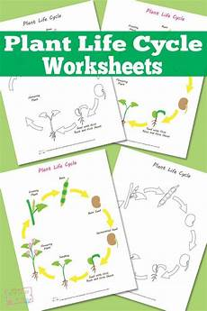 science plants ks1 worksheets 13580 free printable plant cycles and colors on