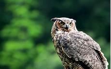 Owl Wallpapers For Desktop