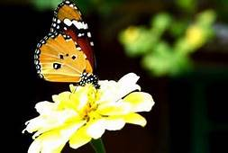 Interesting Facts About Butterfly Gardens  Home Guides