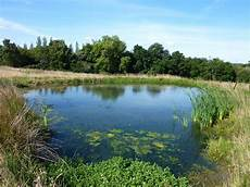ecosystems are ponds that different to businesses tr3dent