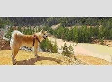 Tatra hond  Karakter, opvoeden, gedrag en meer op