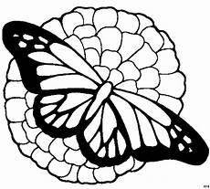 Malvorlagen Schmetterling Quiz Schmetterling Auf Bluete Ausmalbild Malvorlage