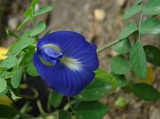 Gambar Bingung Mengutarakan Isi Hati Katakan Bunga Kawaii
