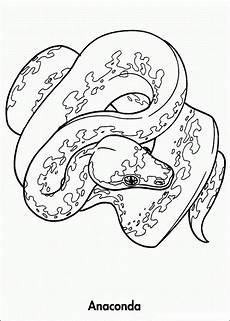 animals of the rainforest coloring pages 17165 rainforest animals coloring pages yahoo image search results animal coloring books
