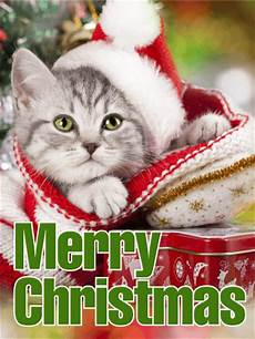 santa cat merry christmas card birthday greeting cards by davia