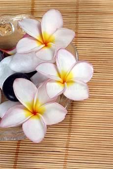 fiore frangipane fiore e ciottoli di frangipane in ciotola di vetro