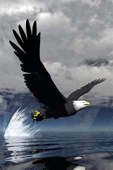iphone black eagle wallpaper hd eagle wallpapers images photos pictures backgrounds