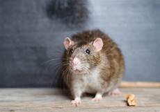 Comment Reconna 238 Tre Une Crotte De Rat Guide Complet