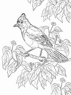 realistic steller s coloring page supercoloring com
