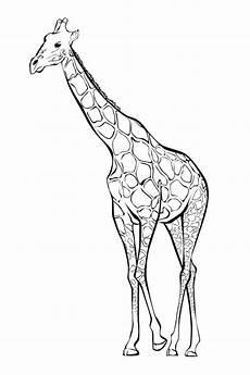 ausmalbilder zum ausdrucken gratis malvorlagen giraffe 2