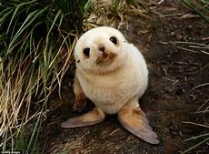 the most adorable animals in the world daily mail online