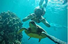 the best molokini snorkeling tours
