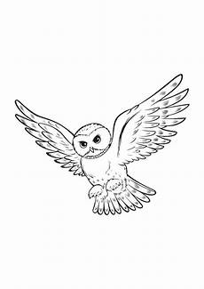 Eule Hedwig Malvorlage Eule Hedwig Malvorlage
