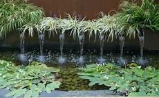plantes aquatiques bassin de jardin bassin de jardin