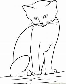 Katze Sitzend Malvorlage Cat Looking While Sitting On Sand Coloring Page