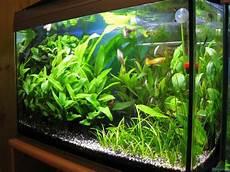 60 liter becken aquarium absolutvanilia becken 60l