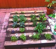 Pallet Gardens by Pallet Herb Garden A Source Of Remedy Pallet