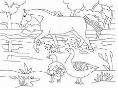 Gambar Gambar Binatang Untuk Anak Tk Untuk Mewarnai Lucu