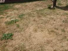 Inzwischen Ist Der Rasen Der Sonne So Verbrannt Da 223