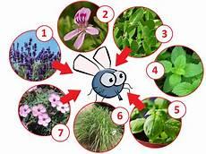 pflanzen gegen mücken und fliegen pflanzen gegen fliegen