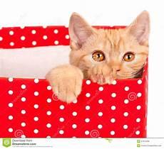 mirada del gatito fuera de la caja de regalo roja de archivo de partido