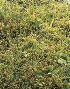 Rasen Reparieren Mit Hornbach