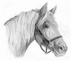 alians gezeichnet22 pferdebilder galerie im reitforum