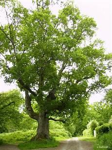ch 234 nes sacr 233 s krapo arboricole page 2
