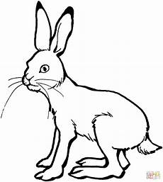 Ausmalbild Hase Sitzend The Tortoise And Hare Coloring Page Coloring Pages