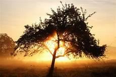 Guten Morgen Herbst Foto Bild Jahreszeiten Herbst