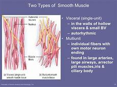 lecture 2 muscle tissue cont