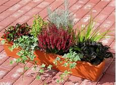 balkonpflanzen herbst winter bepflanzter balkonkasten 80 cm wintergr 252 n im