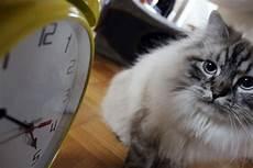 wie lange kann tüv überziehen 2017 wie lange kann katzen alleine lassen